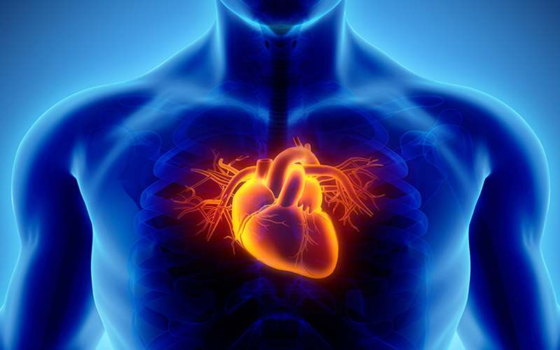 Artery Blockage Symptoms and Treatment