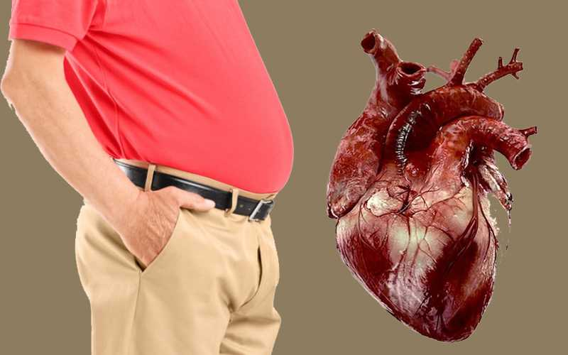 Belly Fat Increases the Risk of Heart Diseases